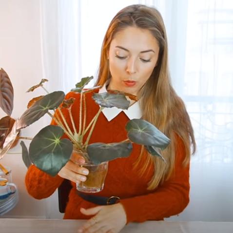 cadeaudiy plante